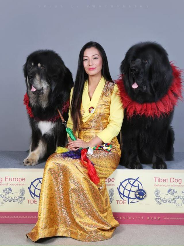 with Mastiff
